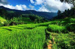 Les rizières en Thaïlande dans le parc national de Doi Inthanon