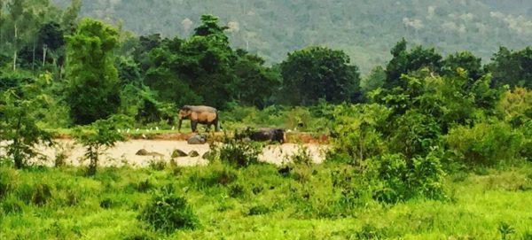 Une rencontre incroyable avec des éléphants sauvage dans le sud de la Thaïlande