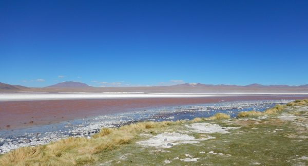 Quelque part en Bolivie, la laguna colorada