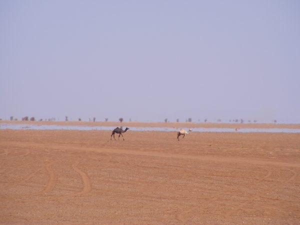 Paysage désertique au Niger, non loin d'Arlit