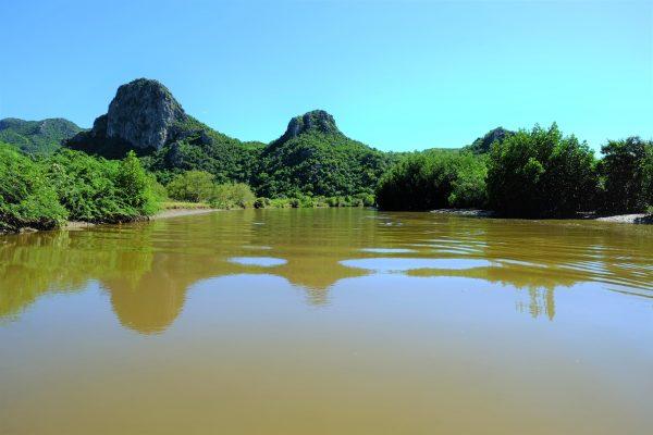 La mangrove un lieu naturel et protégé