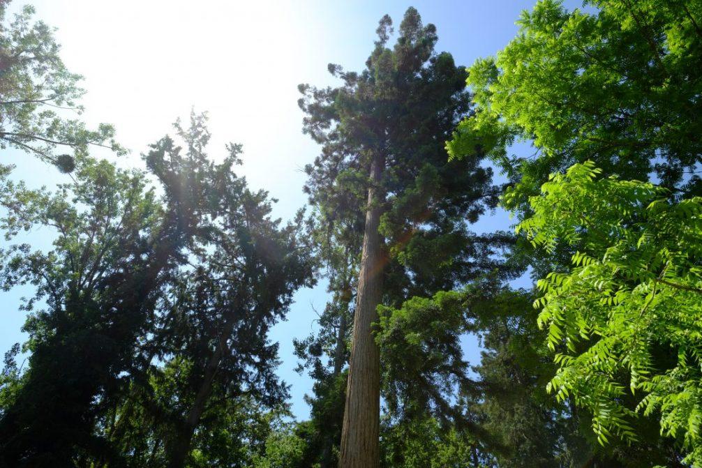Dans les forêts de la planète
