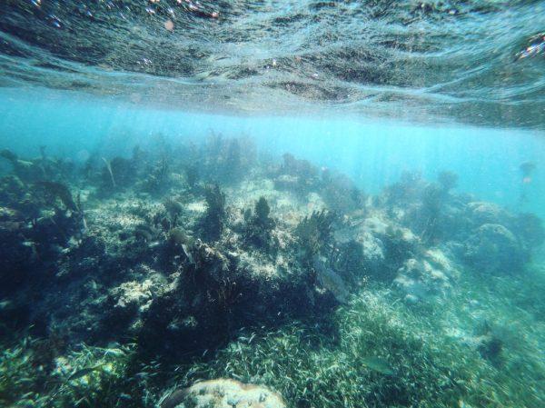 Les coraux du Yucatan, l'une des plus grandes barrières de corail du monde