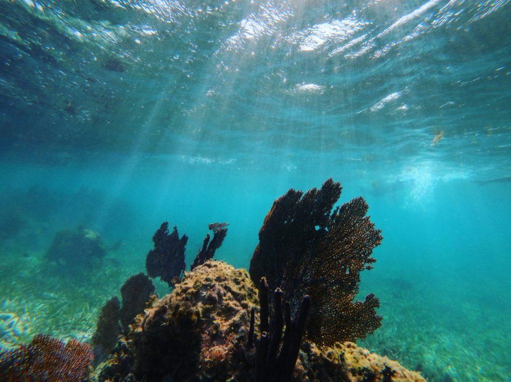 Les coraux aussi beaux que fragiles il faut les protéger
