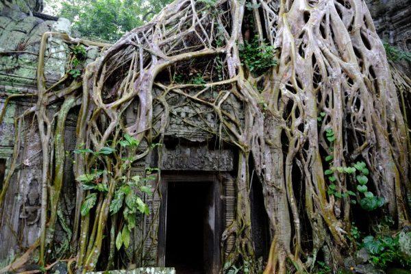Ta Prohm, l'un des plus beaux temples de la Cité d'Angkor