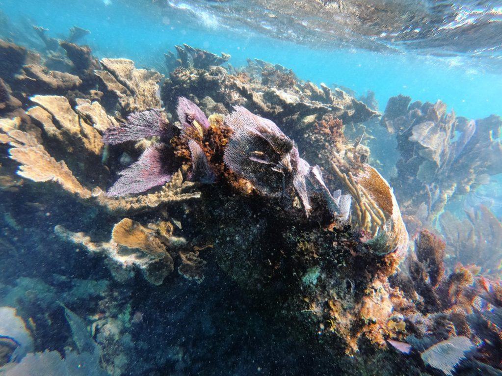 La splendide barrière de corail à Cancun