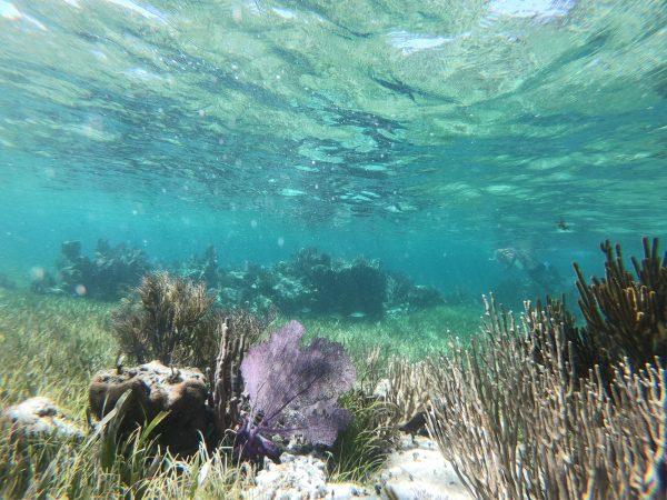 Sous un mètre d'eau on trouve une très belle barrière de corail