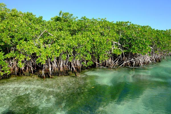 Devant la ville de Cancun c'est la lagune et la mangrove