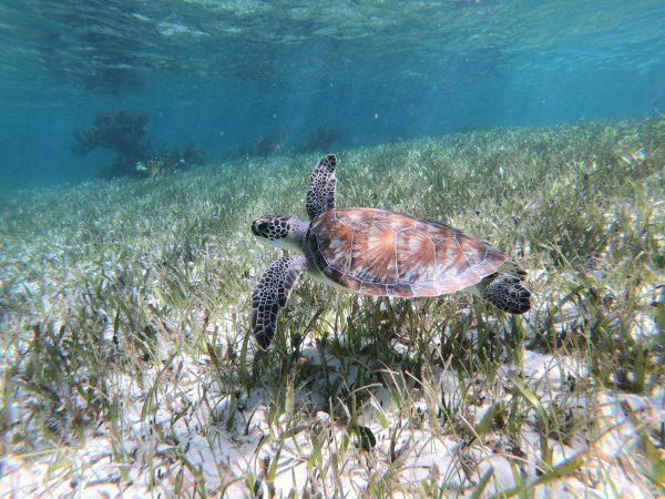 La beauté des fonds sous-marins au Mexique