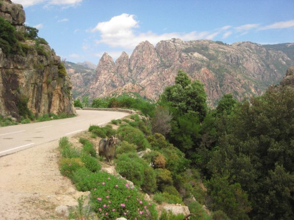 Dans la montagne en Haute Corse