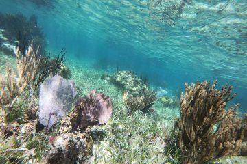 La barrière de corail au niveau de Puerto Morelos
