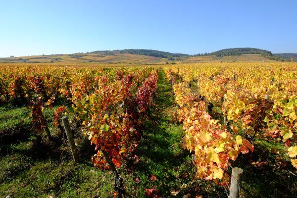 Dijon, Beaune et la vigne dans le département de la Côte d'Or