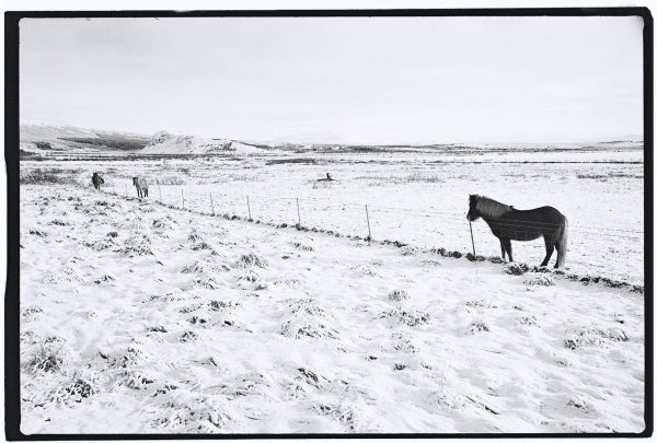 Un cheval dans le sud de l'Islande
