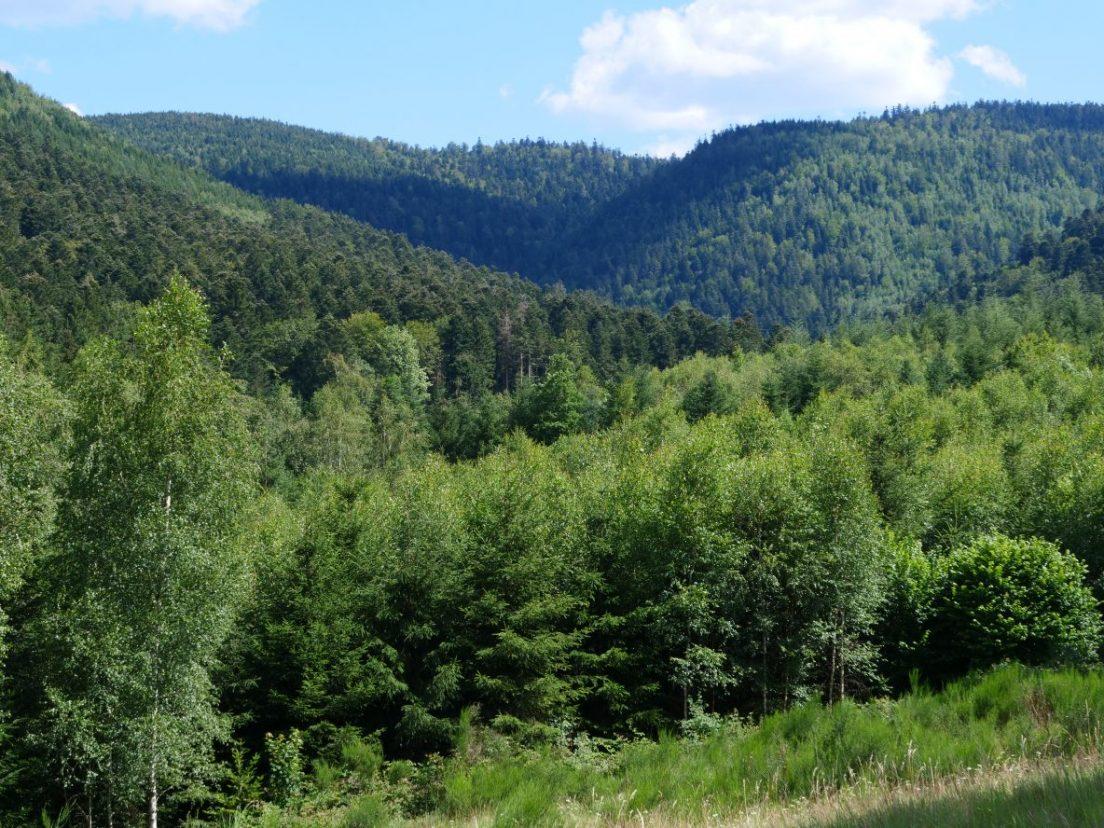 Les forêts des Vosges