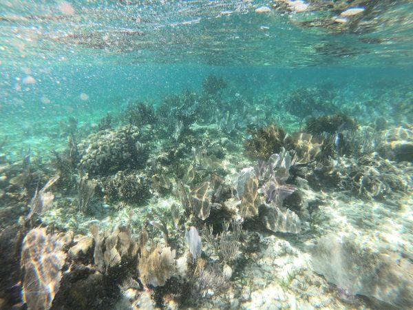 Puerto Morelos et sa très belle barrière de corail