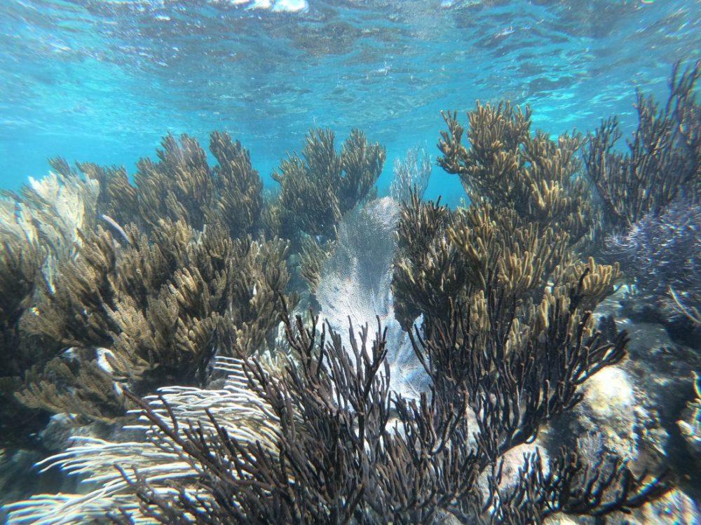 Puerto Morelos, sur la barrière de corail du Yucatan