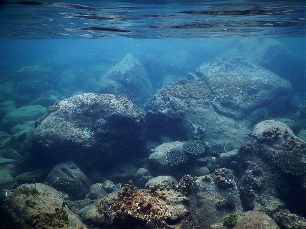 Koh Rong une île fantastique pour la plongée