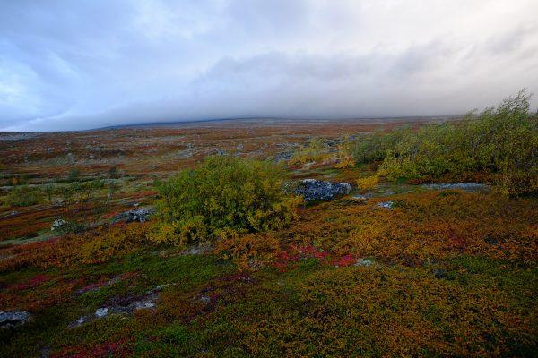 Les couleurs de l'automne au 66 ème degrés nord