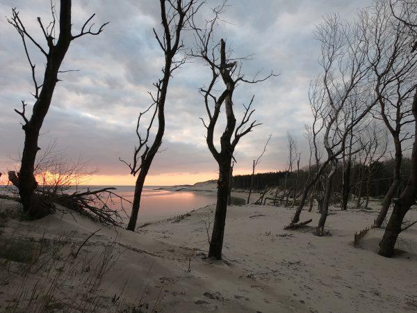 Forêt d'Authie dans le Pas de Calais