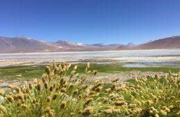 Les plaines de l'Altiplano en Bolivie