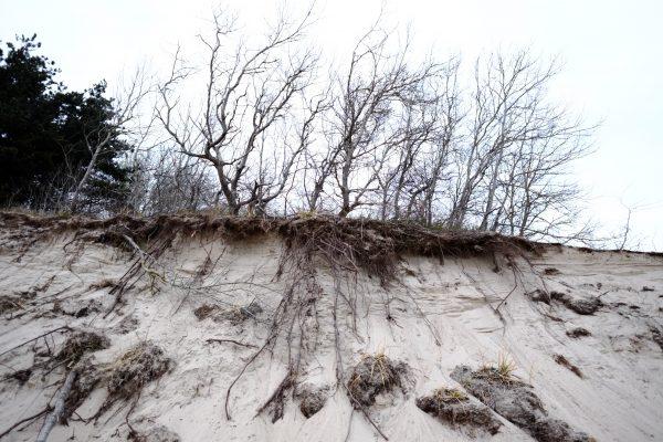 Petit à petit la forêt et la dune disparaissent