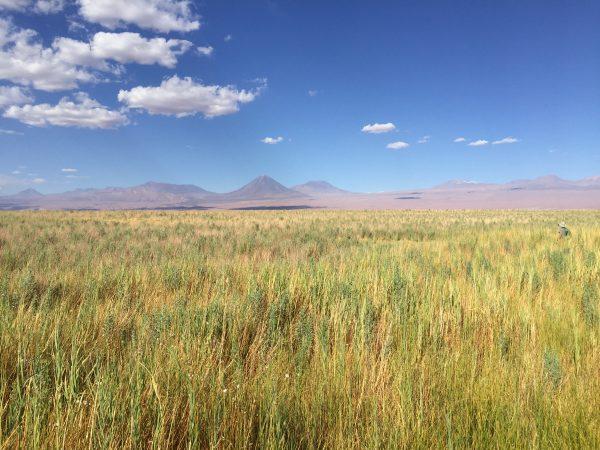 Dans le désert d'Atacama au Chili