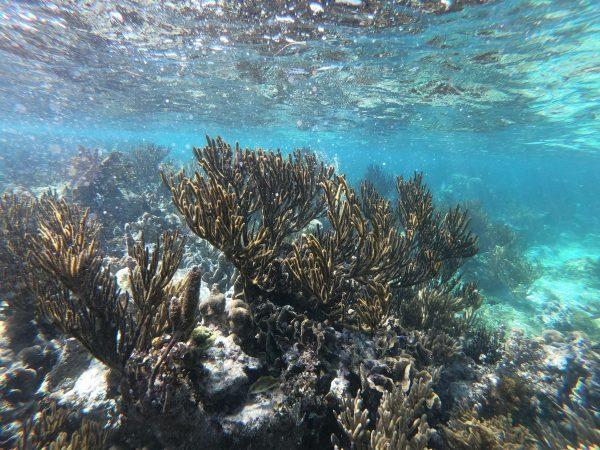 Mer des Caraïbes au Mexique