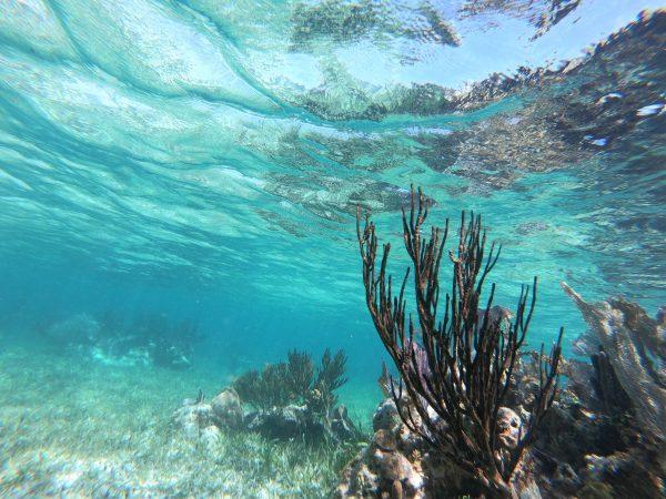 La mer des Caraïbes, l'une des plus belles mers du monde