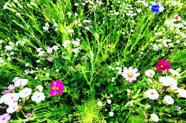 Un signe rassurant les fleurs sauvages du potager