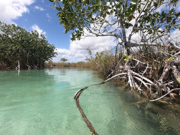 Dans un cours d'eau reliant deux mangroves au Mexique