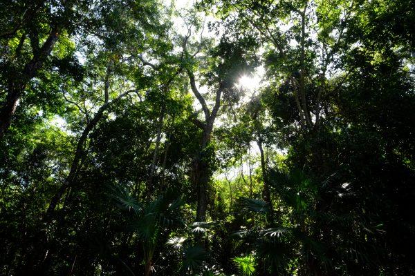 La belle forêt de Si'an Ka'an