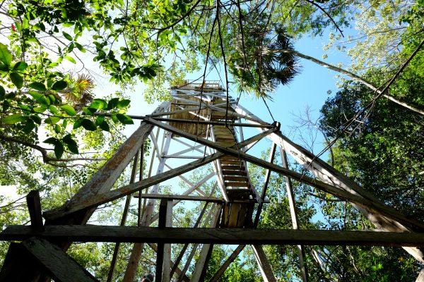Un mirador pour s'élever au dessus de la canopée