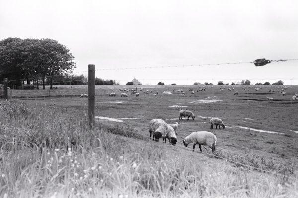 La Normandie en noir et blanc avec un leica M6 de plus de 30 ans