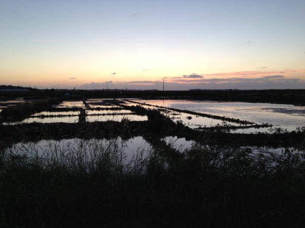Les marais au crépuscule
