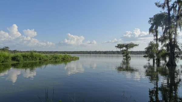 Les fameux bayous de Louisiane