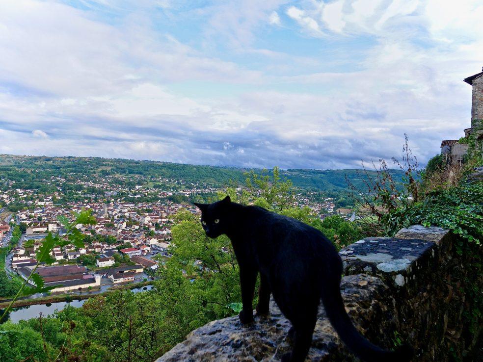Un chat sur les remparts de Capdenac