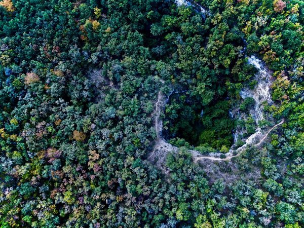 Les forêts dans le Lot
