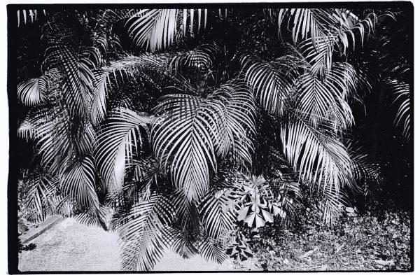 Végétation luxuriante à Basse-Terre
