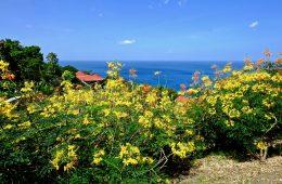 L'un des secrets les mieux gardés des Antilles