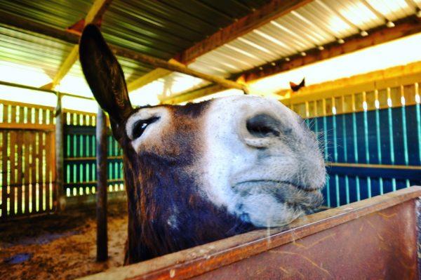 Rencontre avec un âne