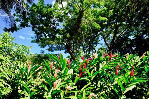 Une vue sur le jardin botanique