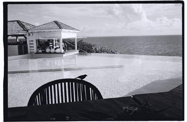 Un petit oiseau s'invite à l'hôtel de la Toubana à Grande Terre, Guadeloupe