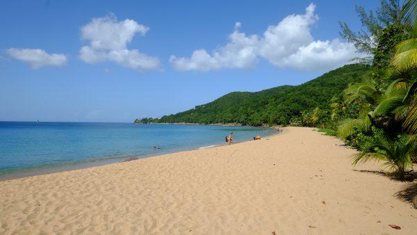 La plage de Grande Anse sous le soleil Antillais
