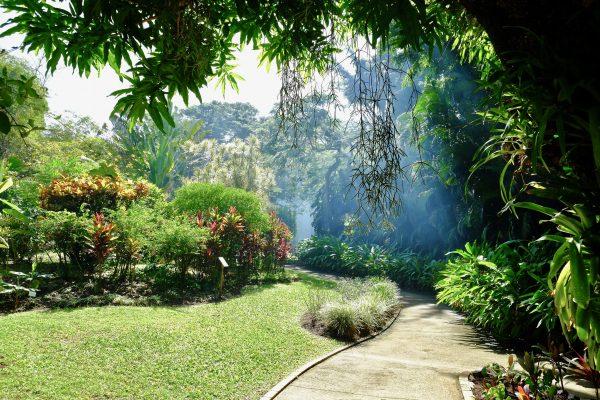 Le jardin Deshaies en Guadeloupe