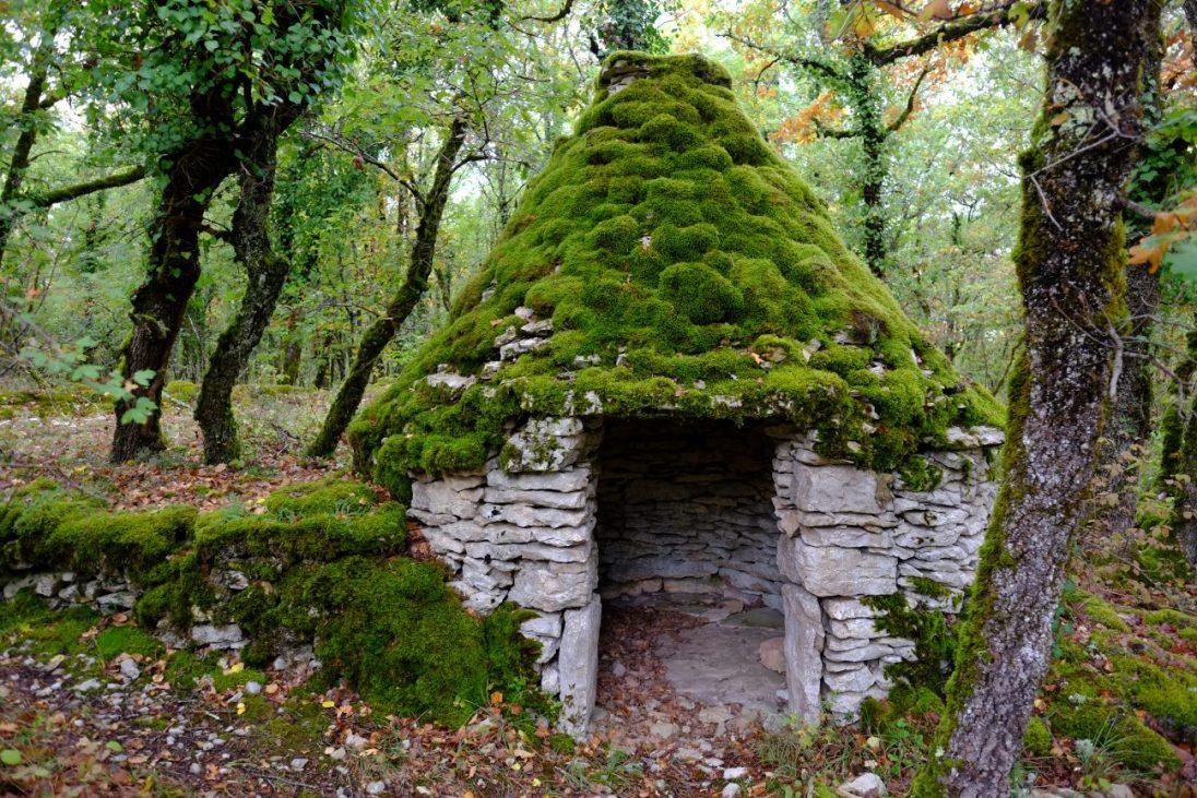 Dans la forêt du Quercy