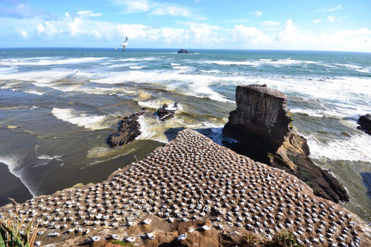La Nouvelle Zélande et sa nature à l'état brut