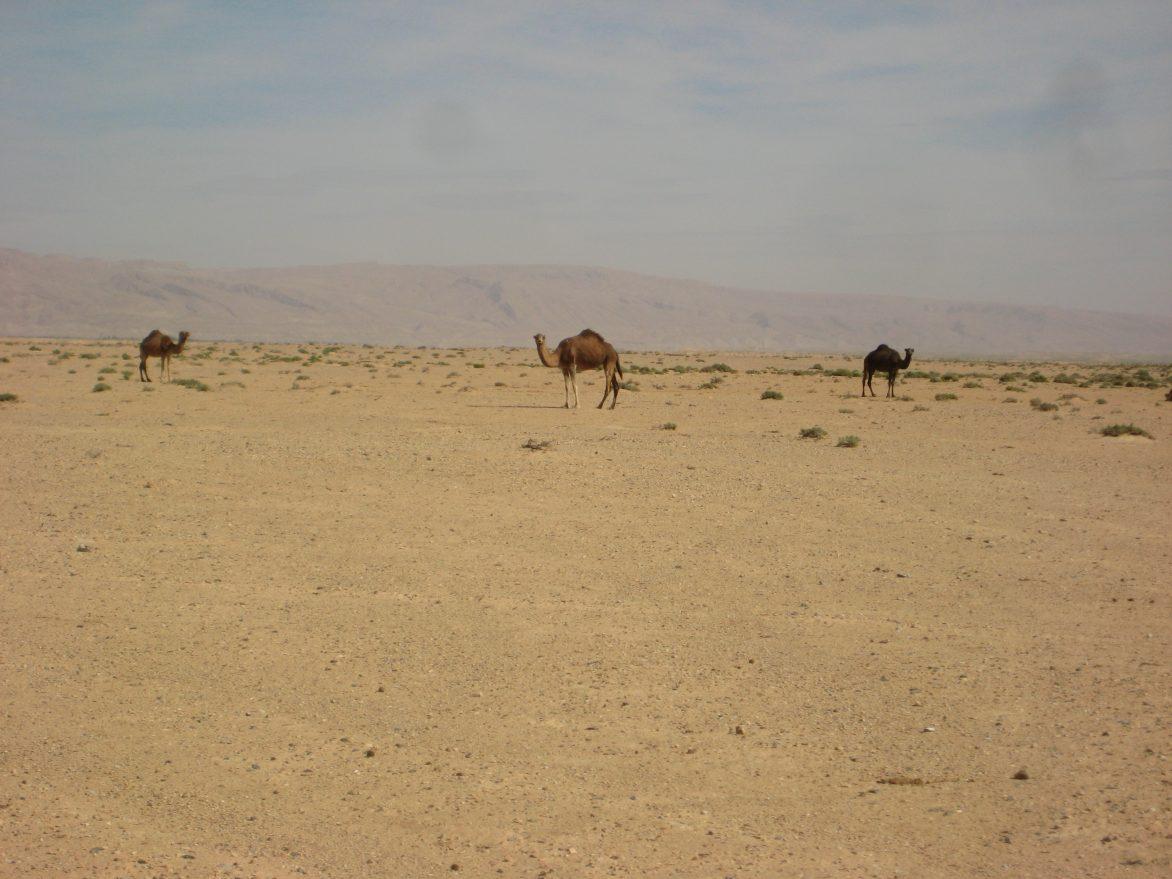 La Tunisie dans l'est du Maghreb