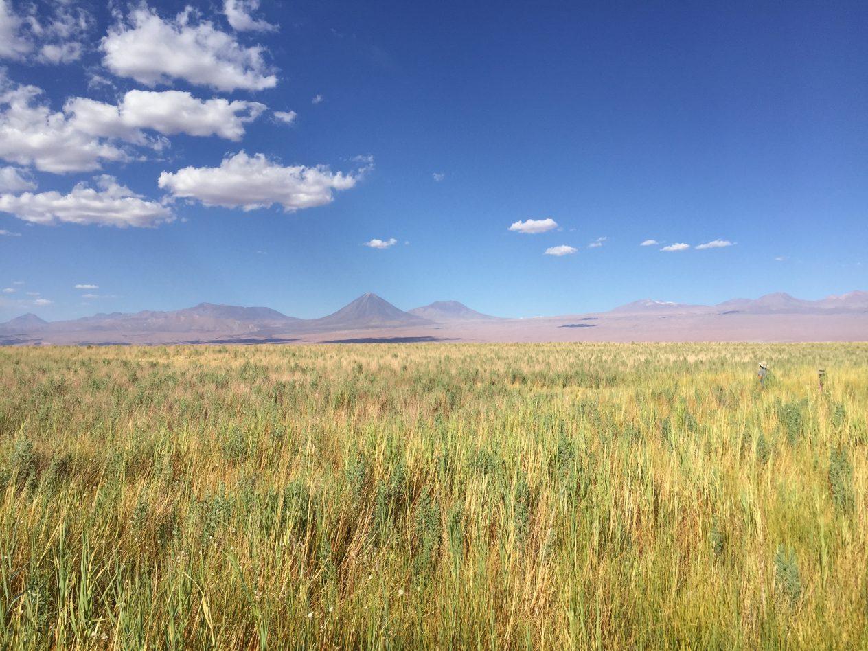 Altiplano et les Andes dans les lointains