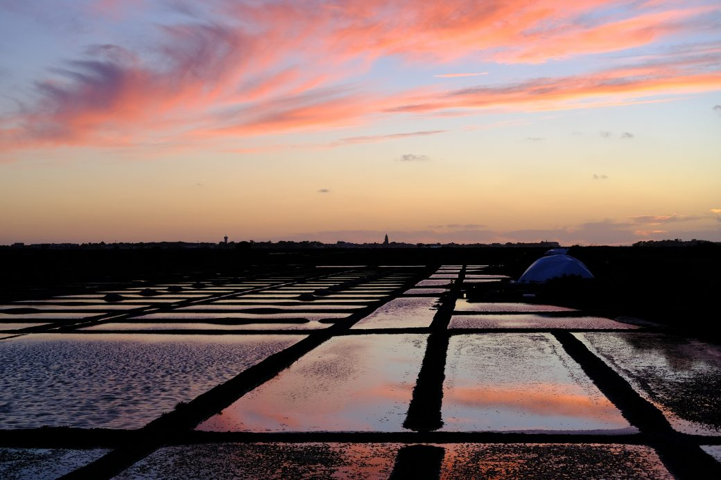 Les oeillets des marais à Batz-sur-mer