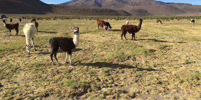La Bolivie, le pays le plus pauvre d'un continent